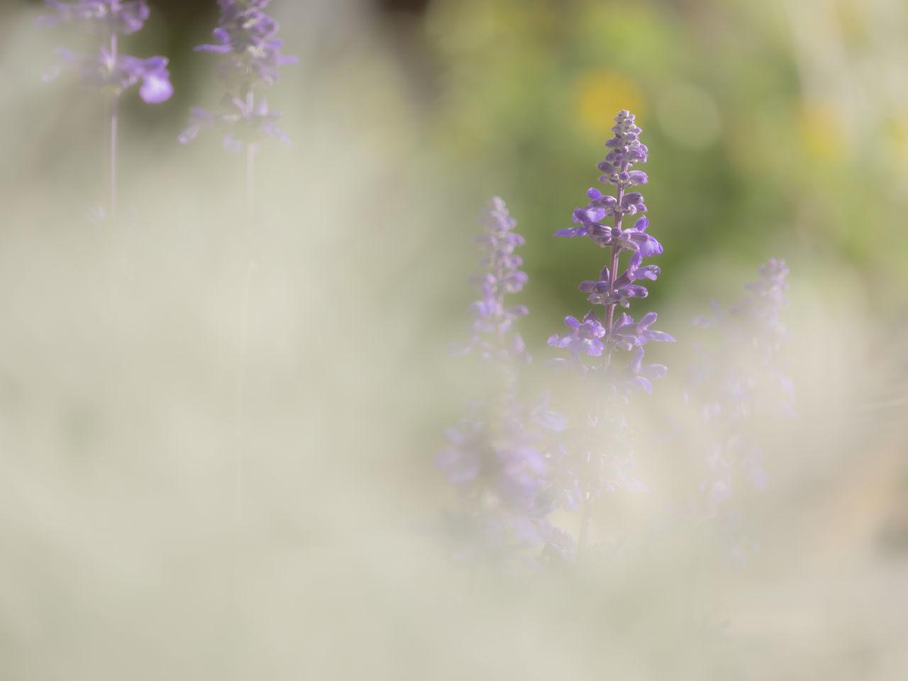 Purple Flowering Plants Growing Outdoors