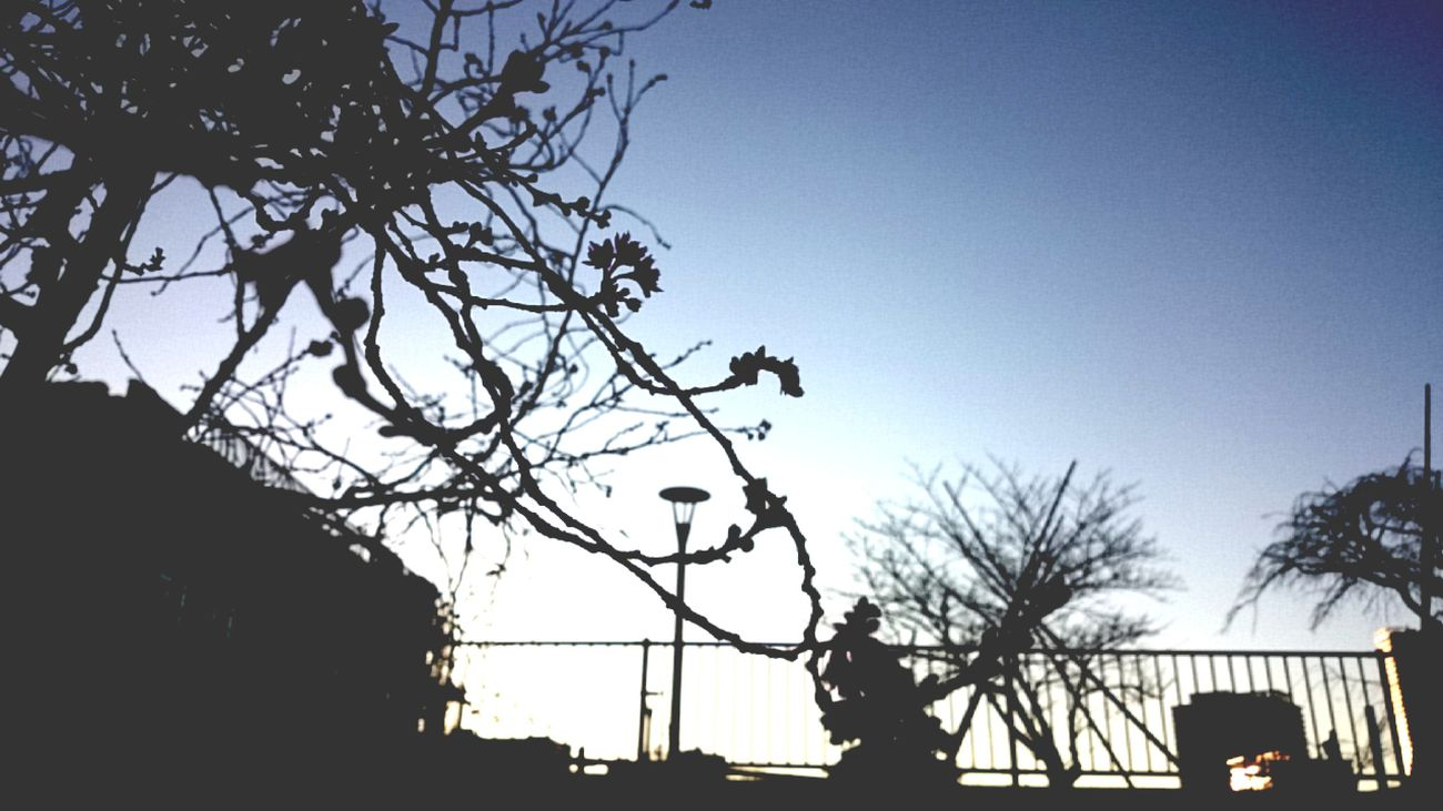 Tree Silhouette Low Angle View Sky Branch No People Building Exterior Outdoors Bare Tree Architecture Nature Day Tokyo,Japan Toyosu Sea Side