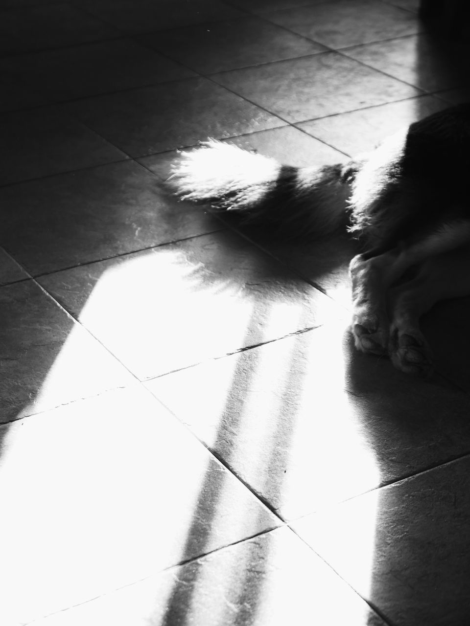 pets, domestic animals, one animal, flooring, animal themes, mammal, dog, indoors, tiled floor, domestic cat, animal, day, no people, close-up, low section