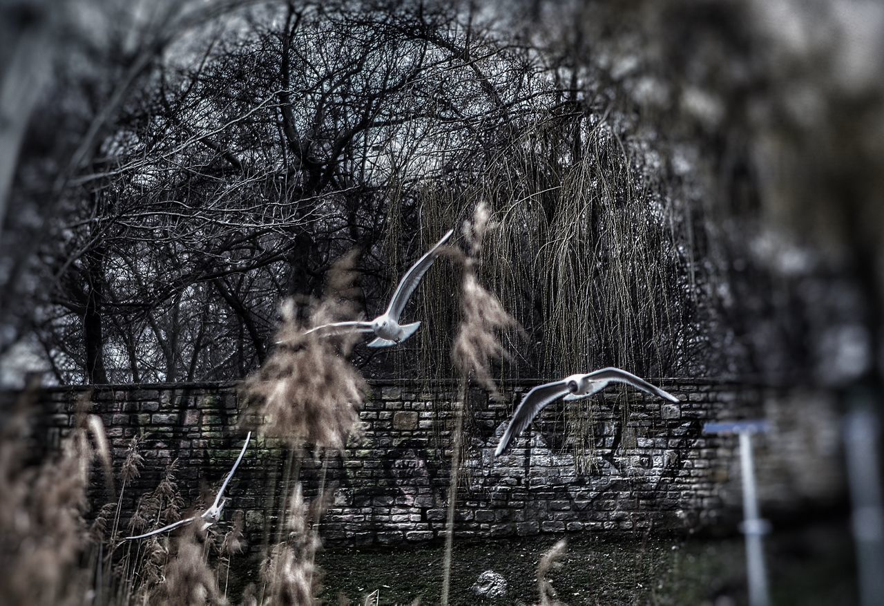 In flight. Taking Photos Waterfront Elégance View EyeEm Gallery Popular Photos Eye4photography  First Eyeem Photo Spooky Atmosphere Creativity Fright Night Changing The World Close-up Front View Birds🐦⛅ Birds_collection Birds Of EyeEm