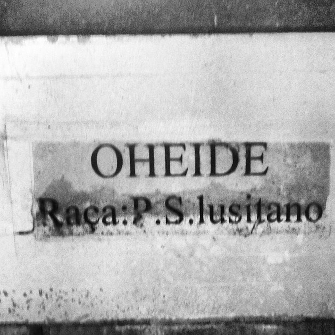 #alterdochao #portugaldenorteasul #portugaligers #igers #igersportugal #alentejo #iphone5 #iphonesia #iphonephotography #iphoneonly #portugaldenorteasul #instagood #instagram #instalove #instamood #instagramers #instagramhub #pictureoftheday #photooftheda Instagood Instagramhub Pictureoftheday Photography Instalove Horses Portugaligers Iphoneonly Igersportugal Photooftheday Portugaldenorteasul Iphonesia Alterreal Instagram Alterdochao IPhone5 Coudelariadealter Instamood Iphonephotography Cavalos Igers Cavalolusitano Alentejo Instagramers