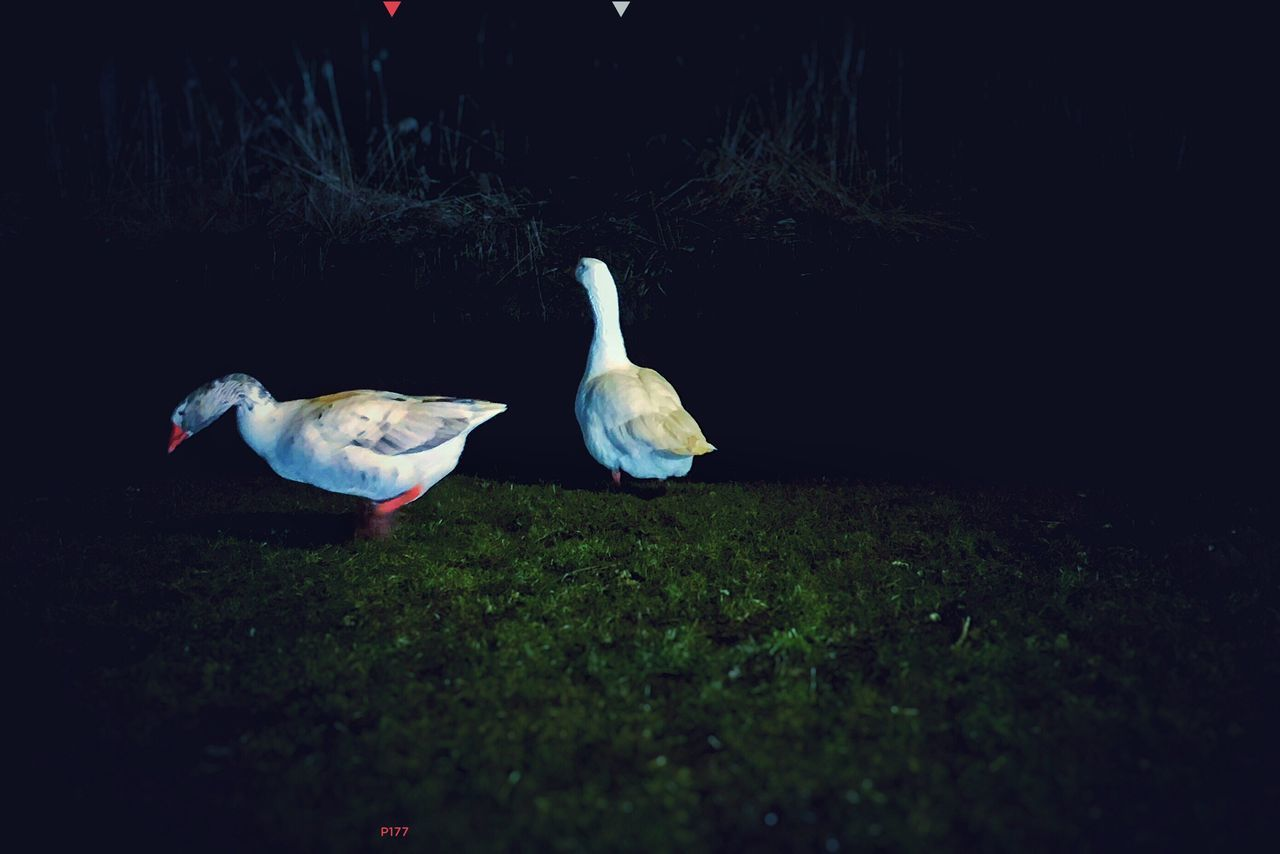 Nocturnal Duo. P177 Onephotoaday 365project Amsterdam Duo Two Two Animals Nightphotography Grass Nature IPhoneography Outdoors In The Fields