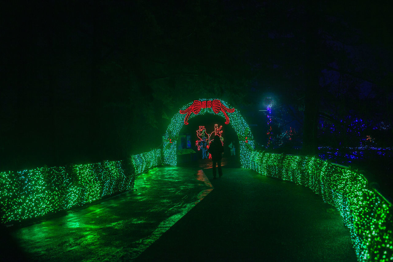 Christmas Lights at Portland Zoo Christmas Lights Decoration Everyday Emotion Everyday Joy Everyday Lives Glowing Green Color Illuminated Leisure Activity Life In Christmas L Life In Colors Life In Public Transport Lifestyles Lighting Equipment Multi Colored Night Outdoors Portland Zoo Christmas Lights The Way Forward