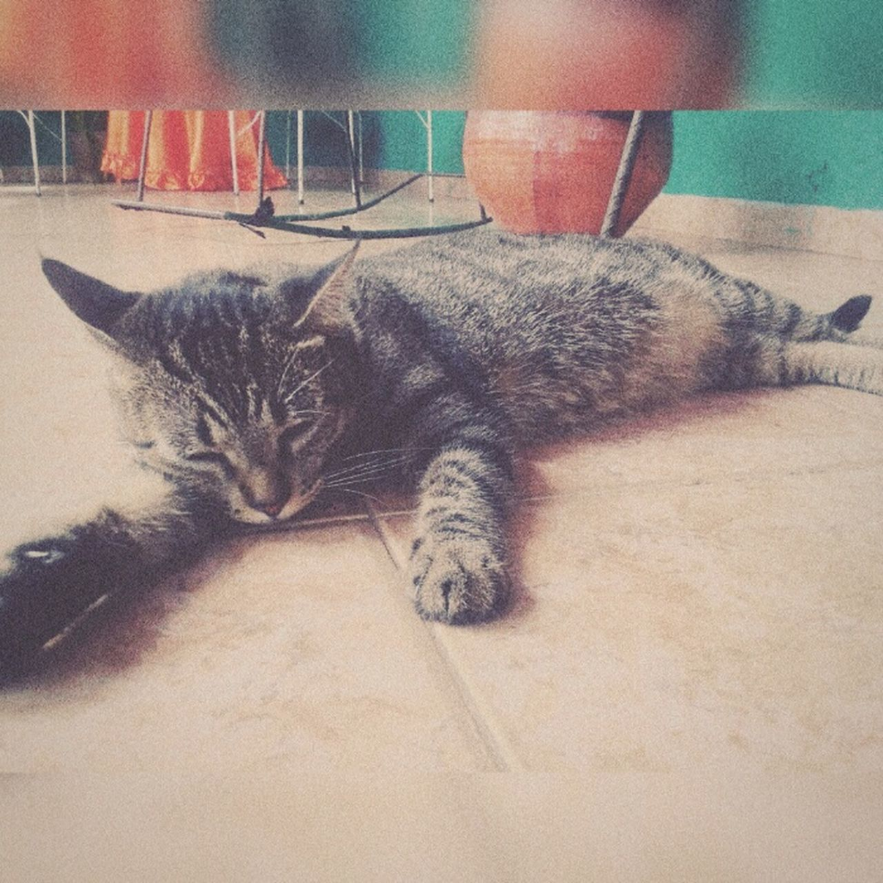 domestic cat, feline, pets, cat, animal themes, domestic animals, indoors, mammal, one animal, relaxation, lying down, no people, close-up, day