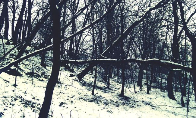 Into The Woods Walking In The Woods Wood Snow And Tree Trees Winter Trees Snow Naked Trees Winter Nature Outside