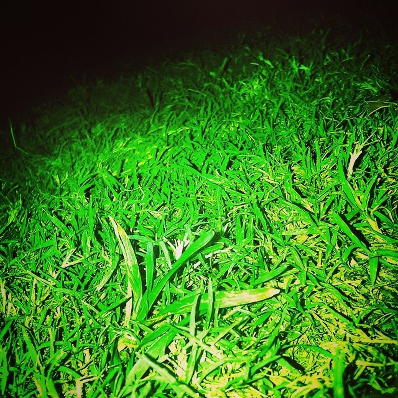 Grass_At_Night Followme Followback Edited_ExtraDark