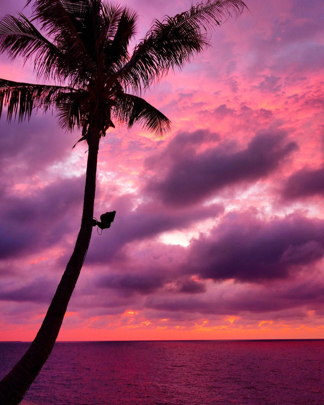 Coconut Tree Beach Sea Sky Sunset Nature Beauty In Nature Cloud - Sky Traveling Iamonmywaytoeverywhere Brunei Brunei Darussalam The Empire Hotel & Country Golf Brunei