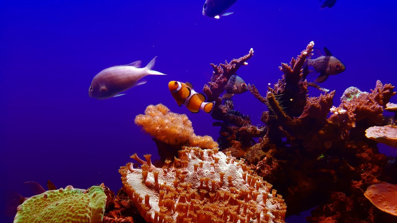 sea life, underwater, water, swimming, animals in the wild, nature, animal themes, undersea, no people, beauty in nature, blue, close-up, sea, day