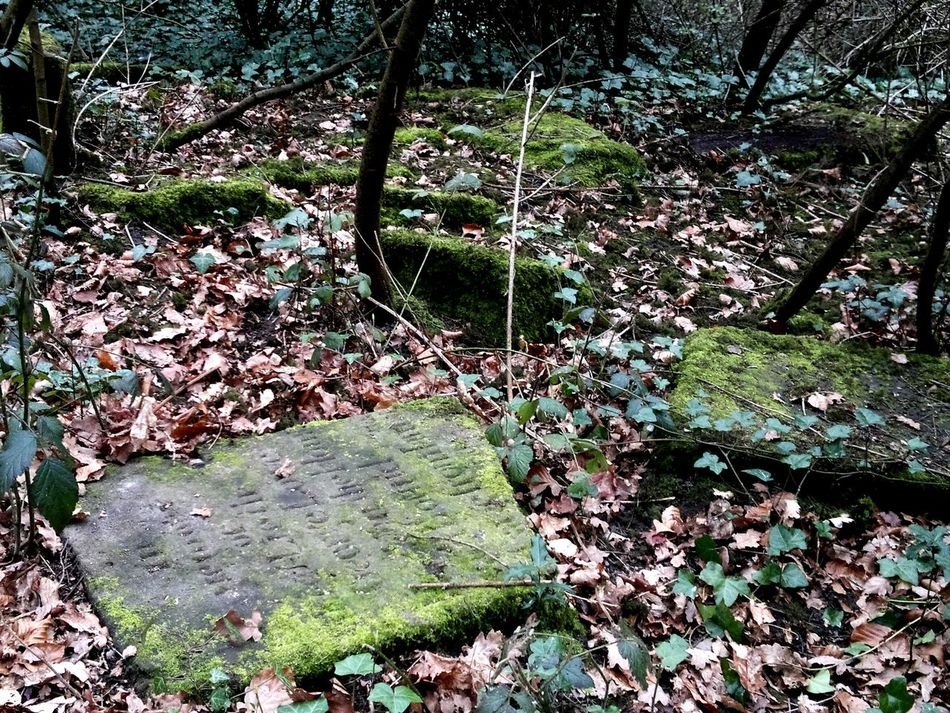 Growth Tree Nature Backgrounds Full Frame High Angle View Outdoors No People Day Tranquility Branch Graveyard Grave Stones Overchurch Woods Wirral Wirral Peninsula Upton Ancient Church Anglo-saxon Norman Bidding Stone