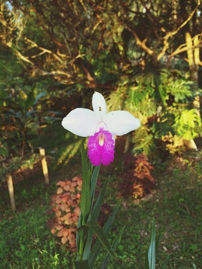 Orquidea de tierra Flower Beauty In Nature Flower Head First Eyeem Photo