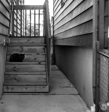 """luna lurking..."" Likeisaac Moodygrams Agameoftones Attacktheshot Way2ill Createcommune Heatercentral Illgrammers Fatalframes Way2ill Reflectiongram Nyc_primeshot Nj Njphotographer Njphotography Newjersey VSCO Vscocam Njshooterz Jerseycollective MG5K Cat Cats Kitten Blackandwhite"