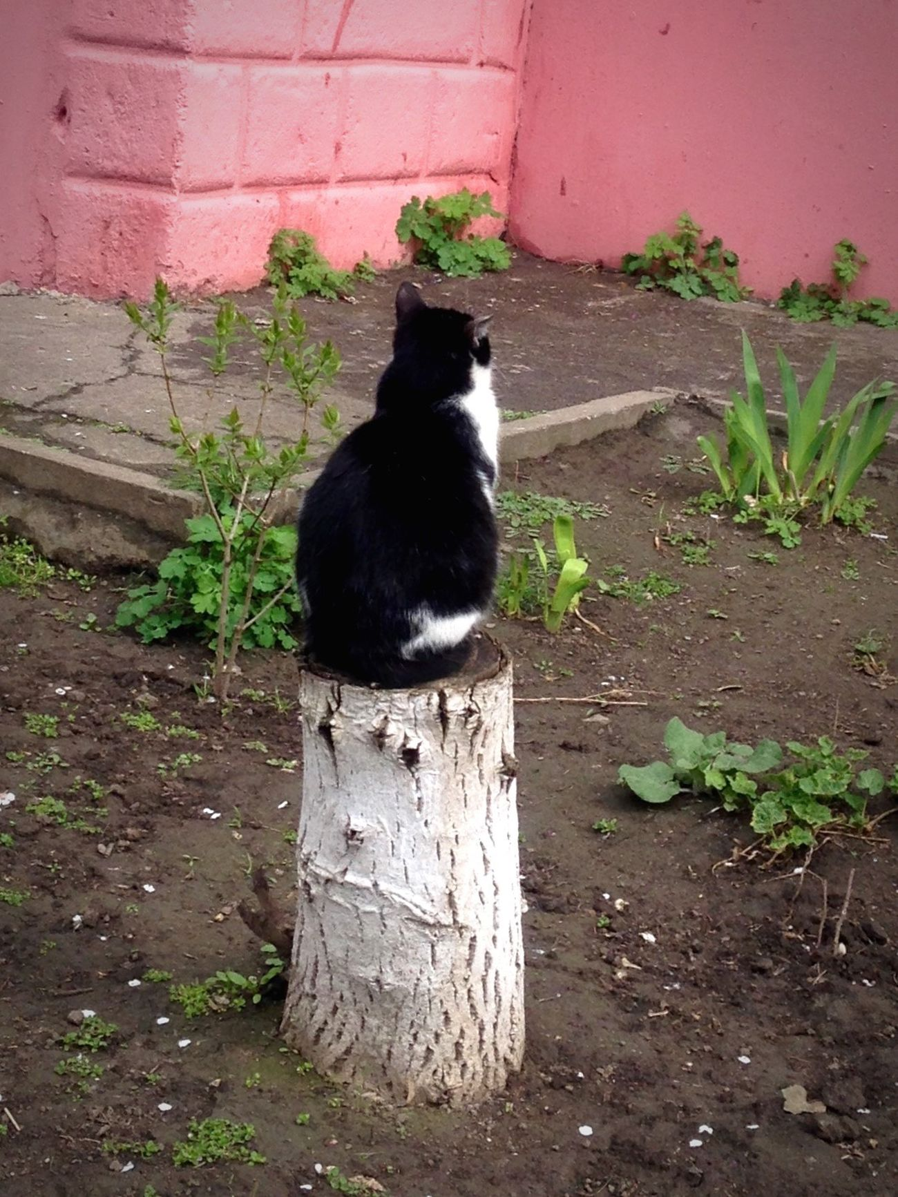 Коты котэ кот Котик Cats Cat♡ Cat Lovers Cats 🐱 Cat Cats Of EyeEm Homeless Cats