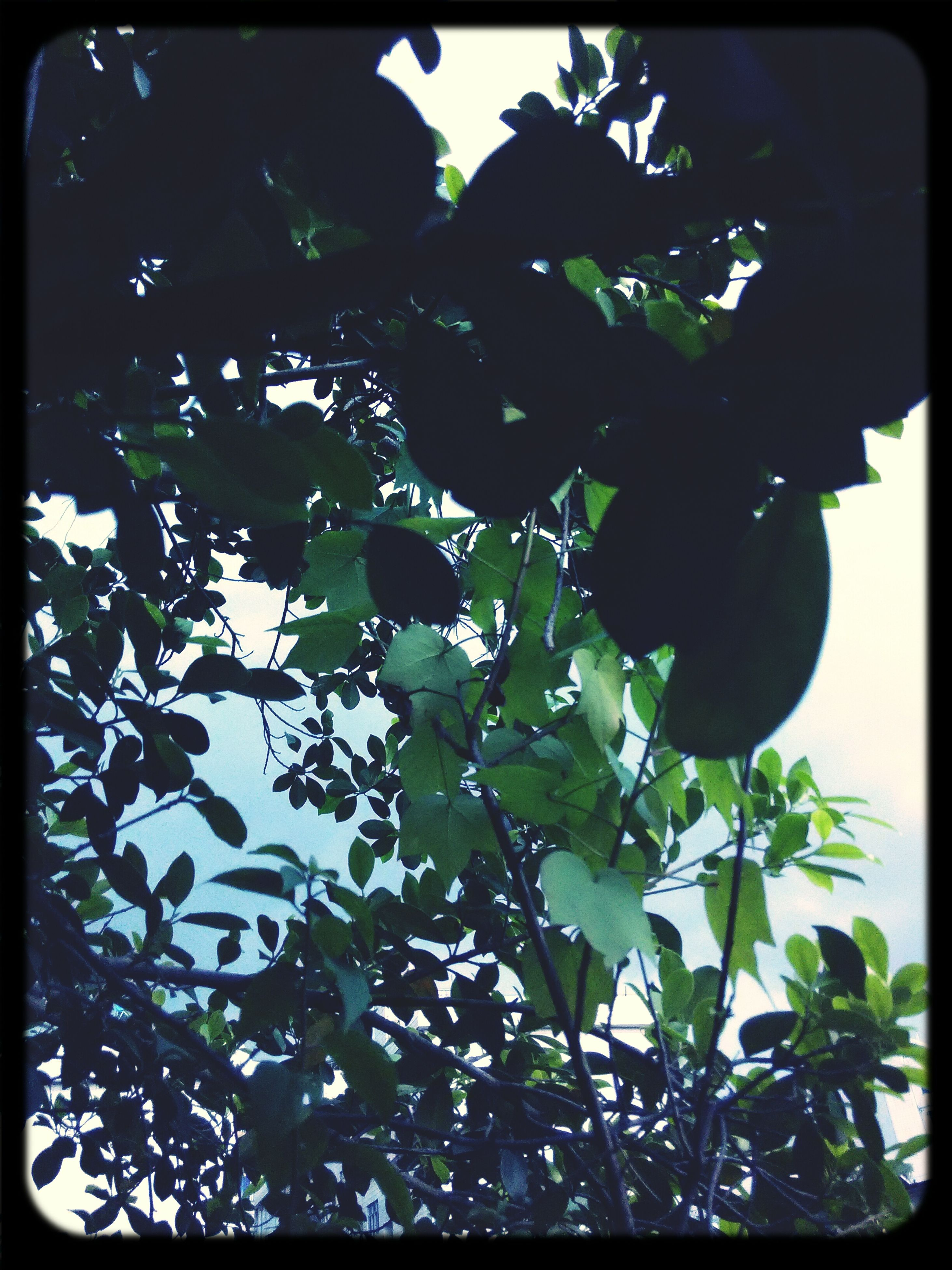 leaf, transfer print, branch, tree, low angle view, growth, auto post production filter, nature, green color, plant, day, close-up, sunlight, outdoors, no people, sky, leaves, beauty in nature, tranquility, twig