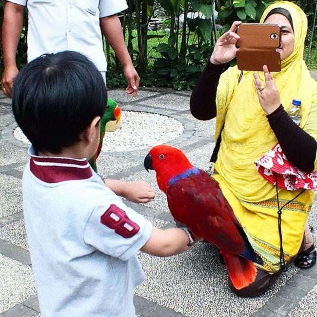 Cheesseee... lucu bangett Birdpark Liburan Baliisland VSCO INDONESIA Lucu
