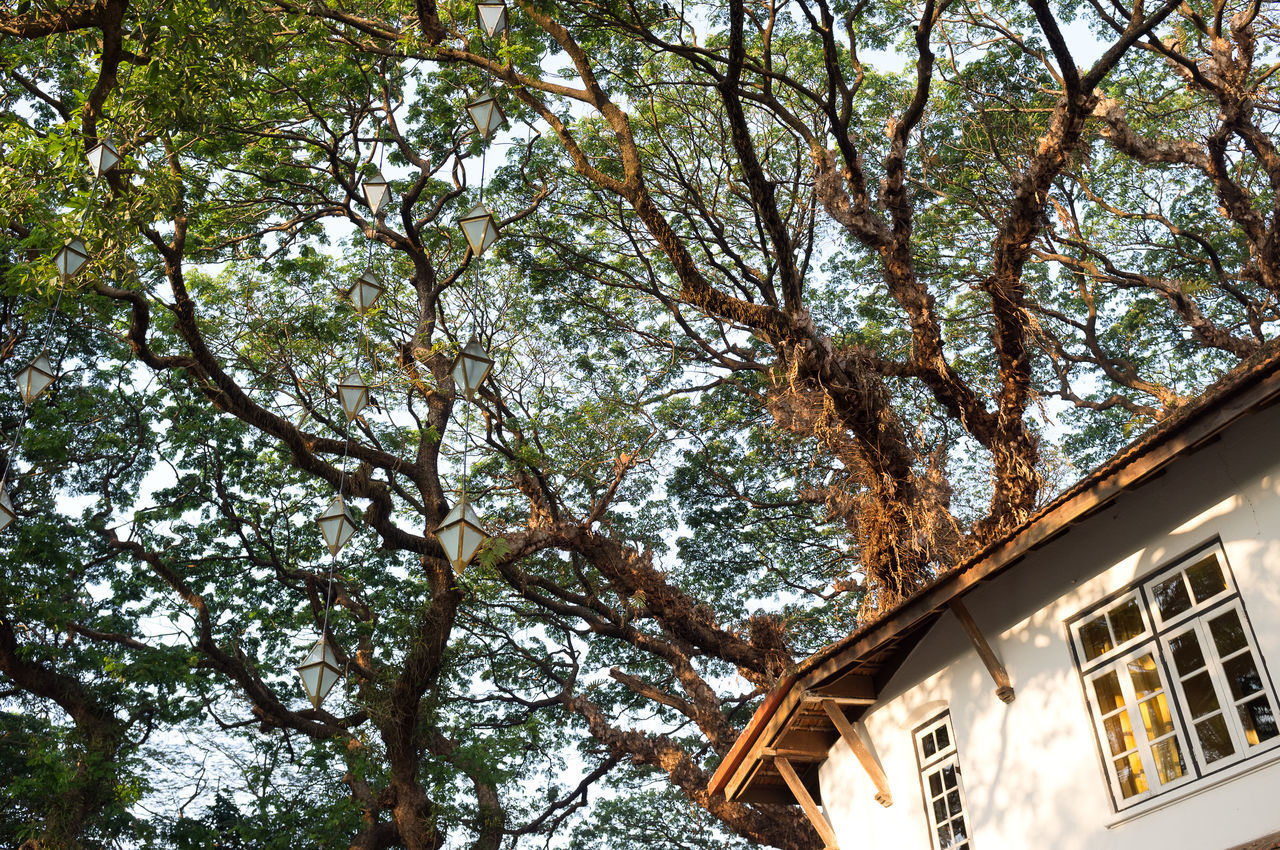 Luxury hotel in trees Architecture Beauty In Nature Branch Building Exterior Built Structure Kerala Kochi Low Angle View Luxury Hotel No People Tree Treetop Hote Treetop Hotel