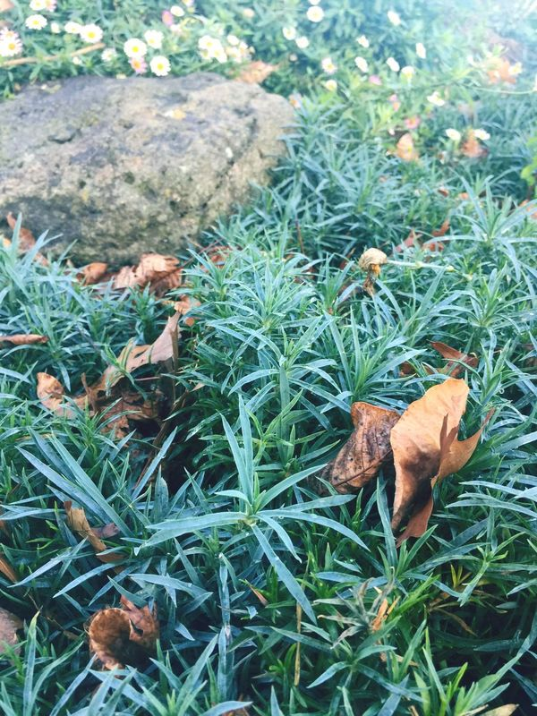 Leaf Nature Plant High Angle View Field Growth No People Day Green Color Afternoon Light Autumn Autumn Leaves Outdoors Fragility Grass Beauty In Nature Close-up Rock Garden Daisies Freshness