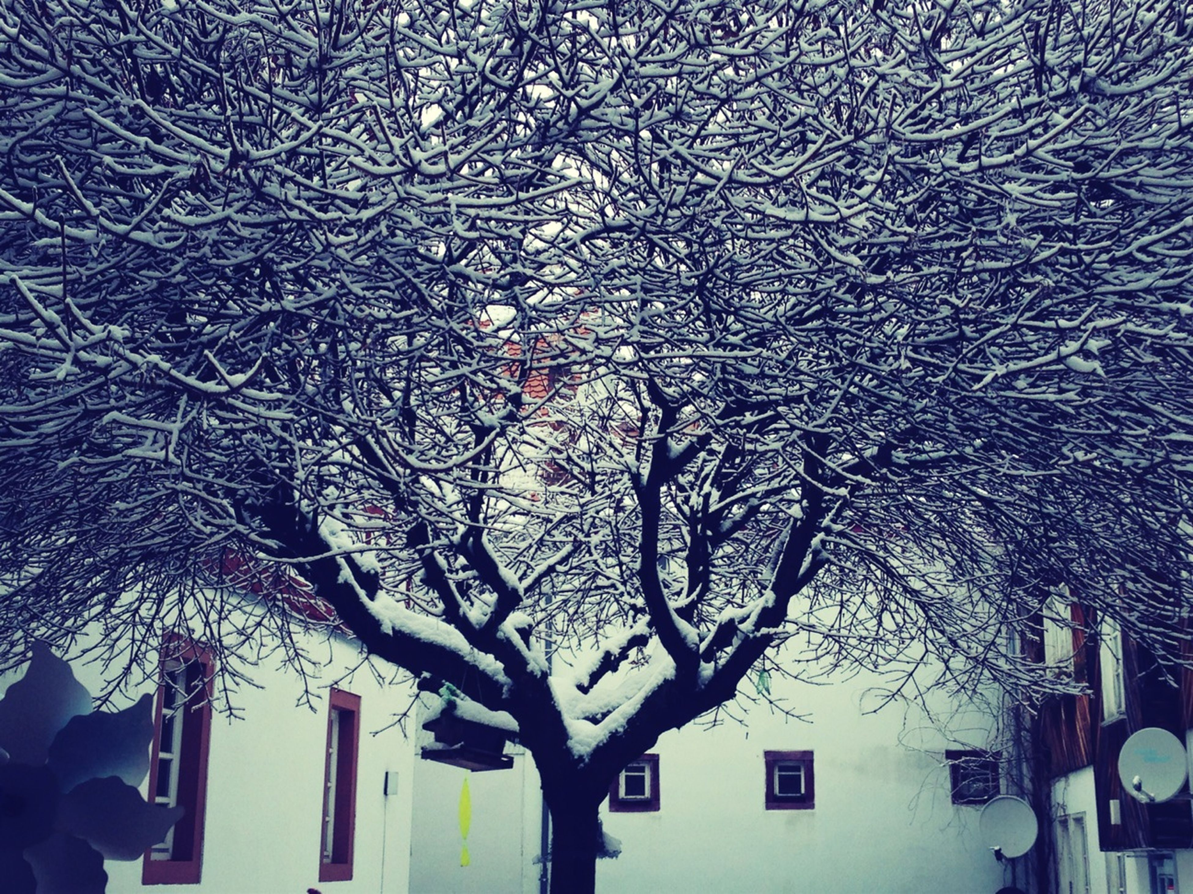architecture, bare tree, built structure, building exterior, low angle view, winter, tree, snow, cold temperature, branch, season, weather, house, building, nature, outdoors, no people, residential building, day, sky