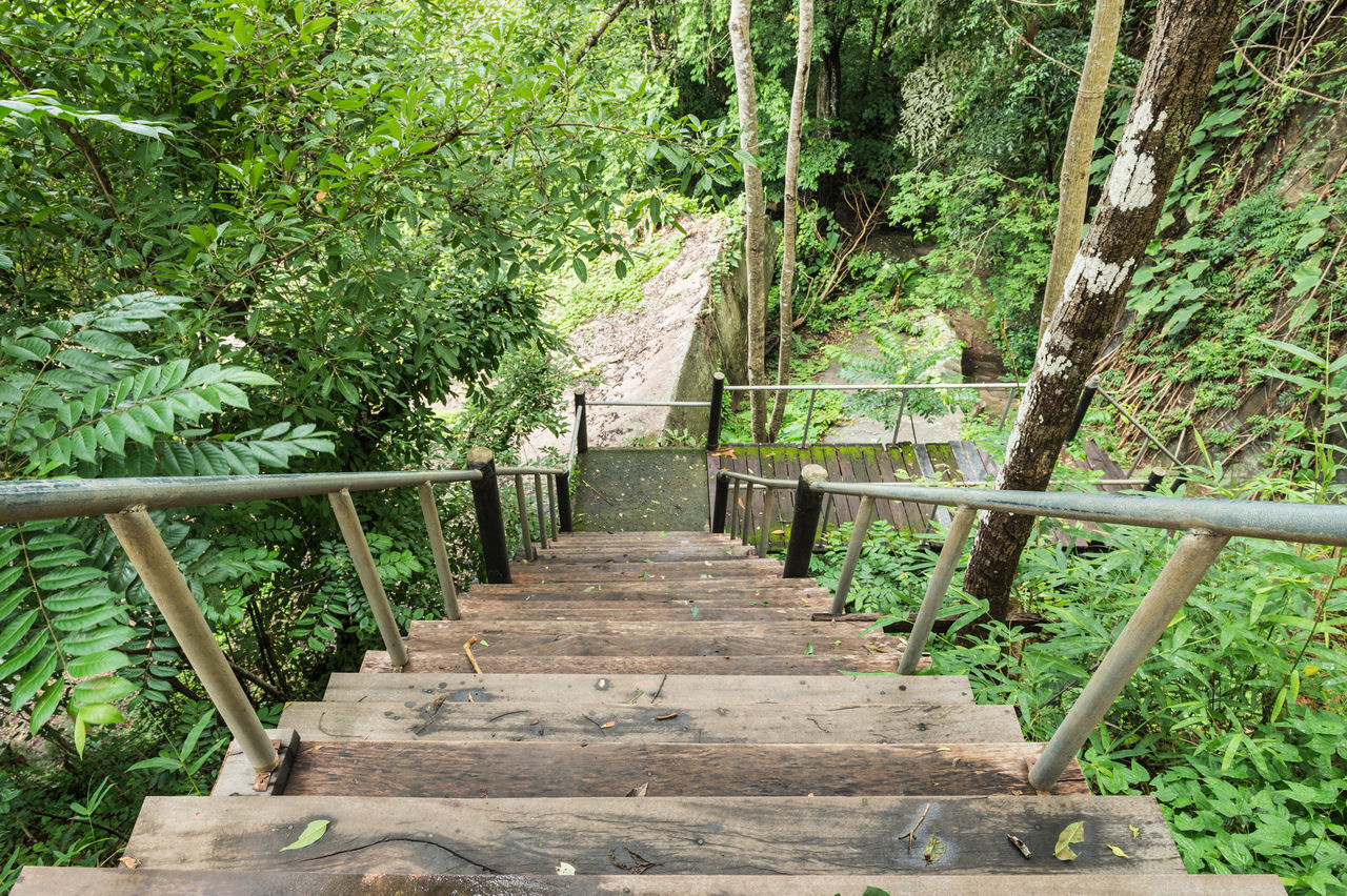 Bamboo - Plant Beauty In Nature Day Forest Garden Growth Nature No People Outdoors Park Pattern Railing Stair Tranquility Tree