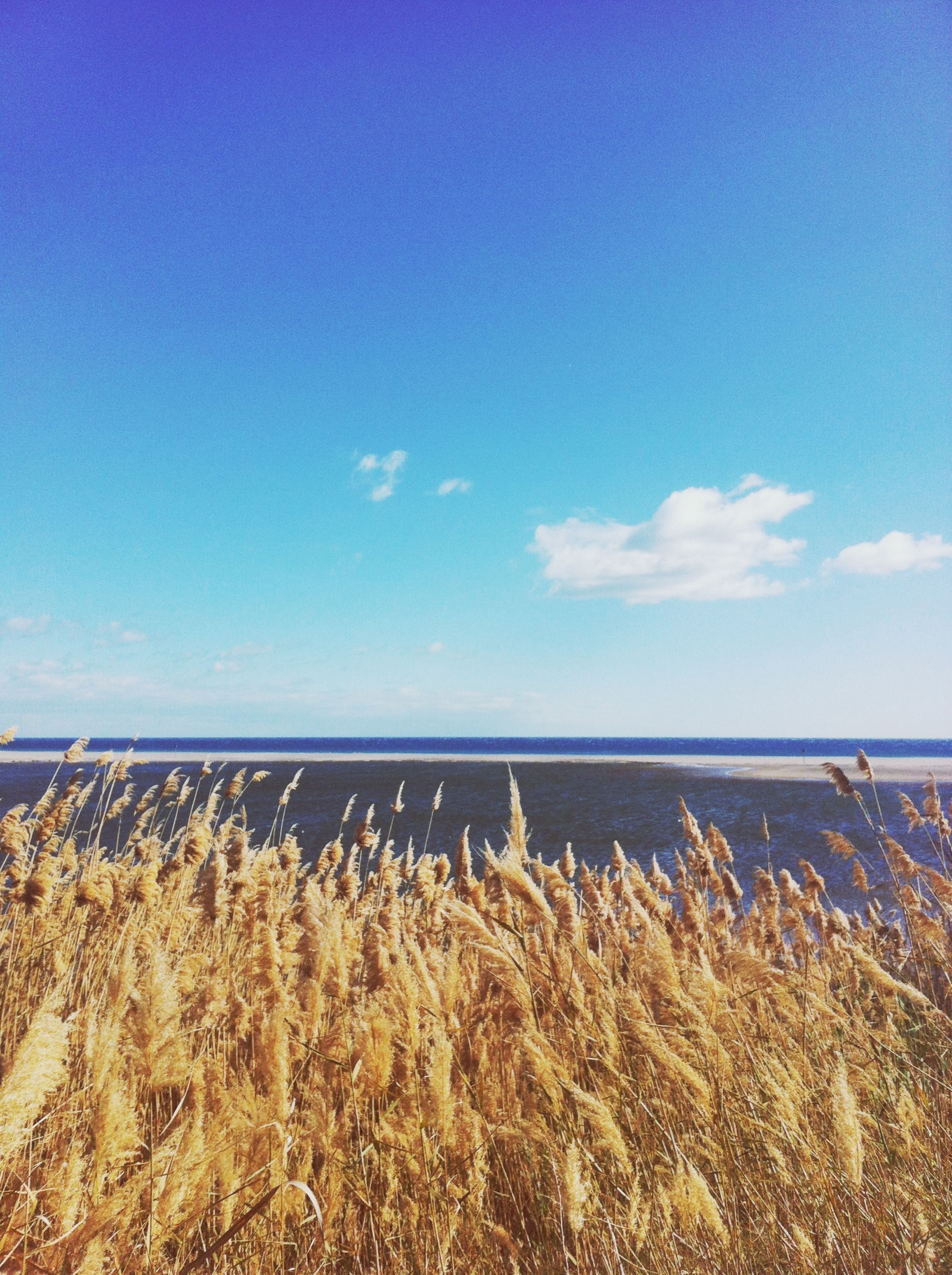sea, horizon over water, tranquil scene, sky, tranquility, beach, scenics, water, blue, beauty in nature, nature, sand, shore, plant, idyllic, cloud, growth, day, calm, outdoors