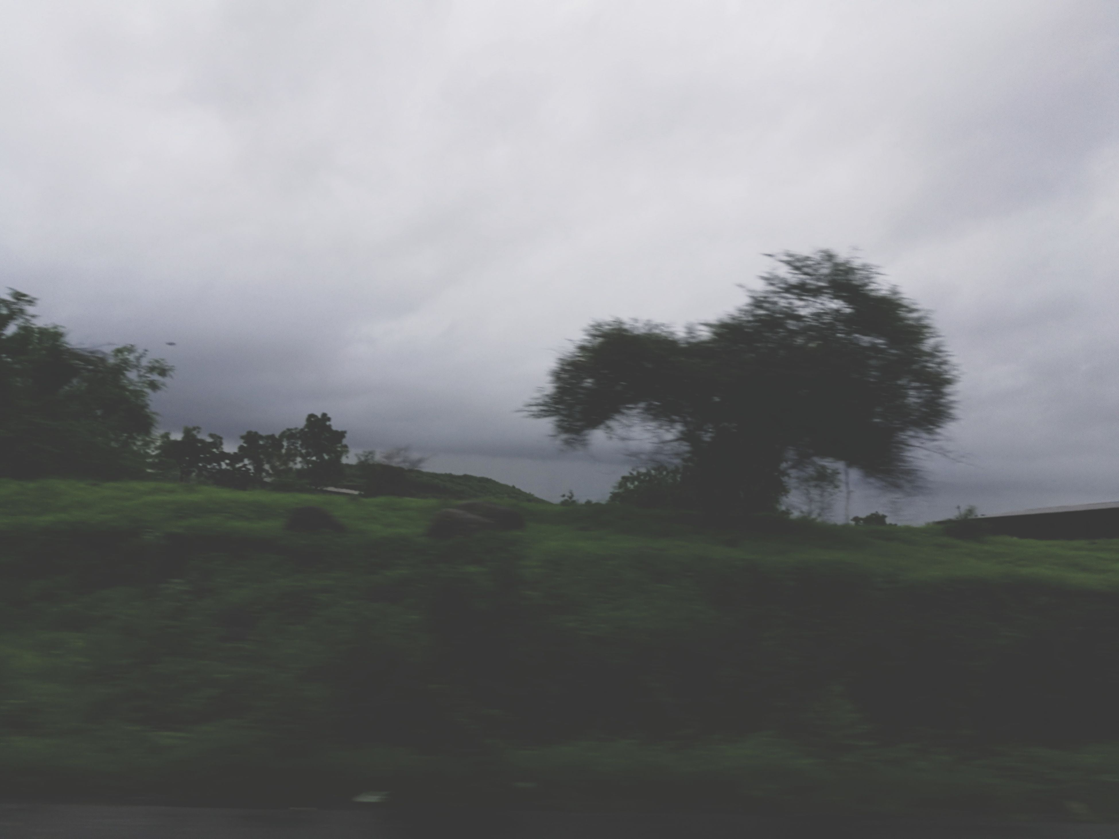 tree, landscape, tranquility, nature, tranquil scene, beauty in nature, scenics, grass, no people, sky, outdoors, field, cloud - sky, green color, day