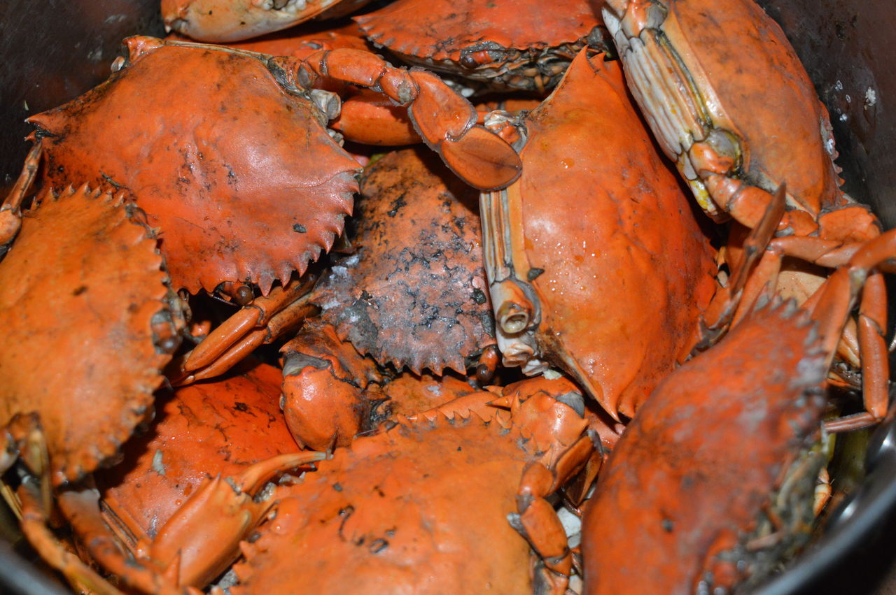 Sea Food crabs Cook Crabs Crab Legs Crab Shell Crabbies Crabs Crabshell Sea Food Sea Food Photography
