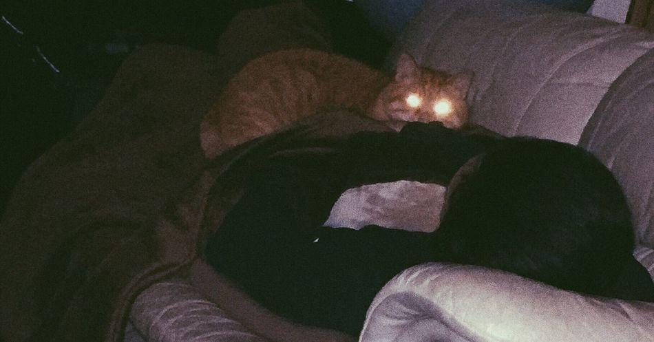Cat Cat Lovers Beam