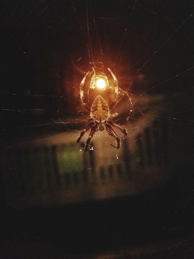 Danger Close-up Night Illuminated Nature Spider Web Bug Light Scary Up Close