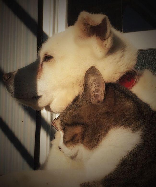 🐶「お前カリカリ貰ったか⁉️」😿「まだなんだよねぇ〜‼️」🐶「遅ぇよなぁ今日…」 EyeEm Animal Lover Mydog 半家猫 Taking Photos Eye4photography  Taking Photos 犬と猫 Melancholic Landscapes Relaxing 仲良し