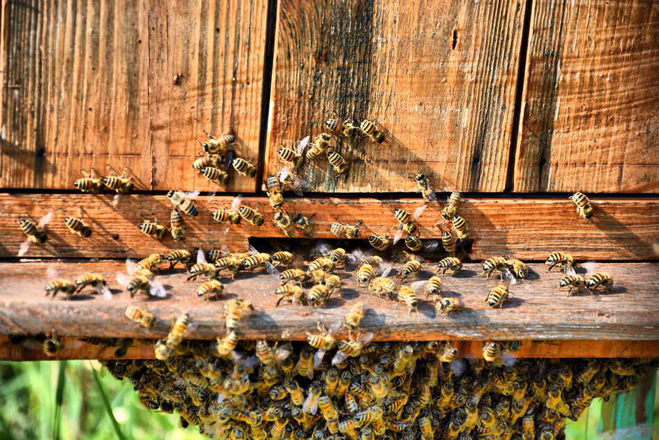 Beekeeping Bees EyeEm Nature Lover Nature_collection Nature_perfection Poland Sugajno