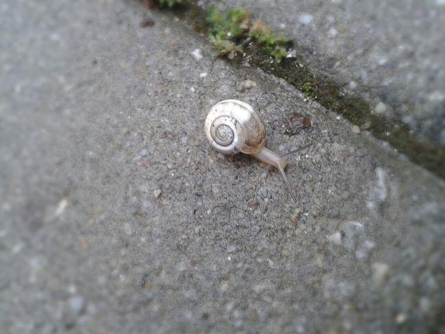 Rain Rain The Tiny Snail Snail🐌 Open Edit🐌🐌