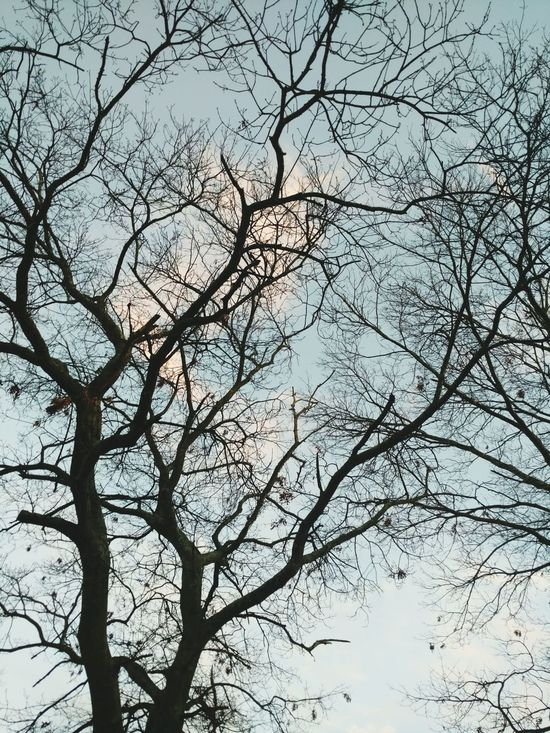 Tree Nature Bare Tree Sky Branch Outdoors Day Beauty In Nature No People Art Is Everywhere EyeEmNewHere