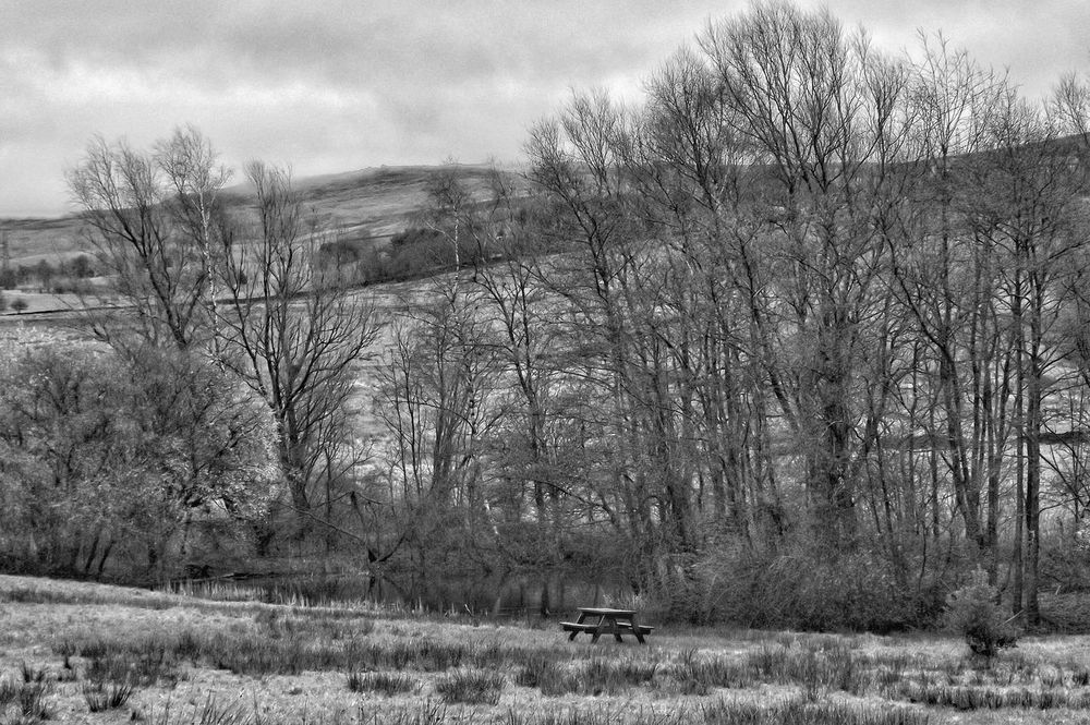 Taken at Hollingworth Lake Bench With A View Beautiful Day Peace And Quiet Nature On Your Doorstep Beauty In Nature Nature Taking Photos Hdr Photography EyeEm Best Shots Hdr_Collection Black And White Collection  Bnw_collection Fujifilm No People Check This Out Bnw Photography Black And White Black And White Photography Monochrome Creative Light And Shadow Light And Shadow Black N White Collection Nature In Black & White