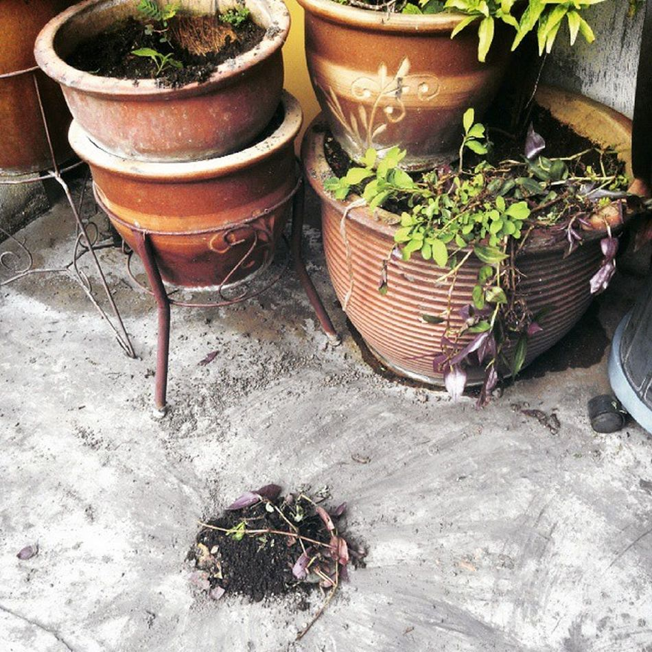 My dog poop in the car porch but he cover the poop with sand from the flower pot nicely.