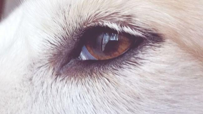 Taking Photos Eye For Photography Dog Lover Dogoftheday Doglife Dogstagram Doglover Dog❤ Woff Natural Simplicity Taking Photos Photooftheday Instadaily BBQ Bestoftheday Beauty