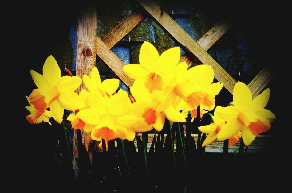 Un air de printemps........ Flowers Yellow Inmygarden Naturemakesmehappy