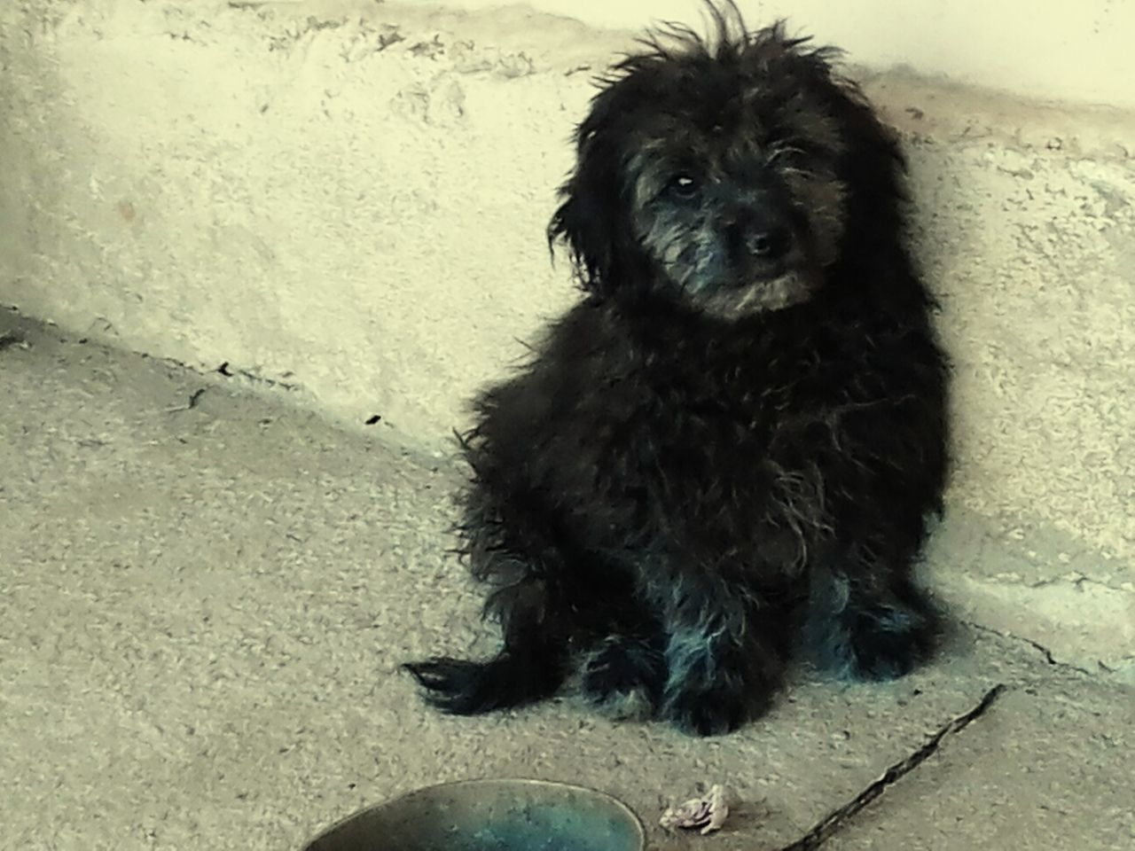 Meu Poodle 1° Foto First Eyeem Photo