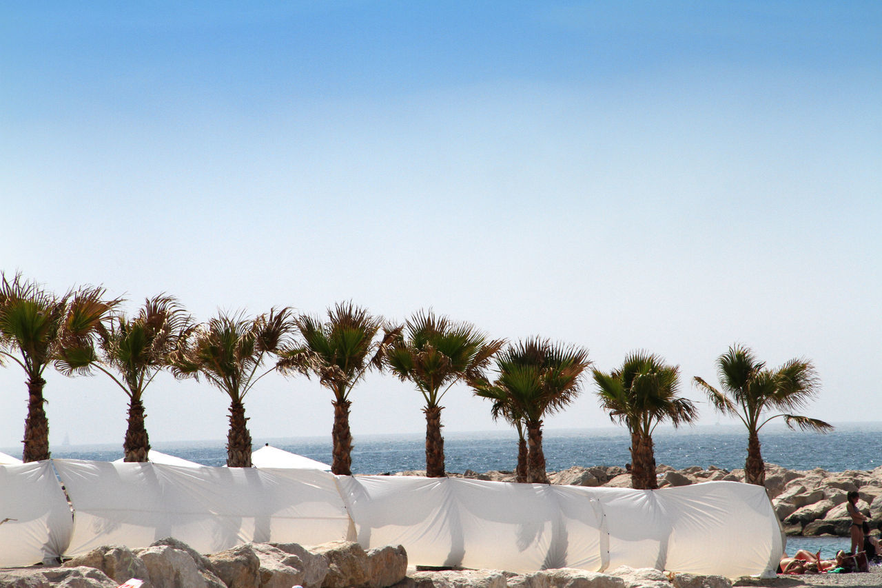 Boundary By Palm Trees Growing At Beach Against Clear Sky