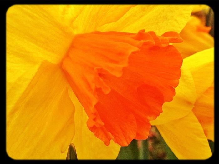 Detalles #texturas  #primavera #spring #flores #narcisos #flowers #valledellozoya #colors