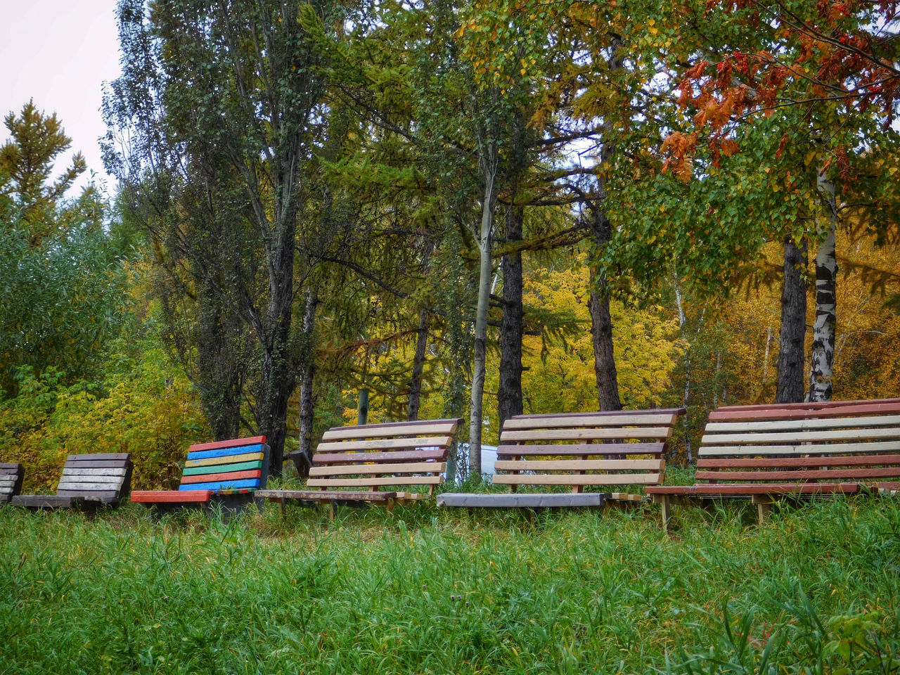 Beauty In Nature Bench Day Empty Grass Green Green Color Growth Nature No People Non-urban Scene Outdoors Park - Man Made Space Park Bench Plant Scenics Solitude EyeEm Diversity Tall - High Tranquil Scene Tranquility Tree Tree Trunk WoodLand Beautifully Organized