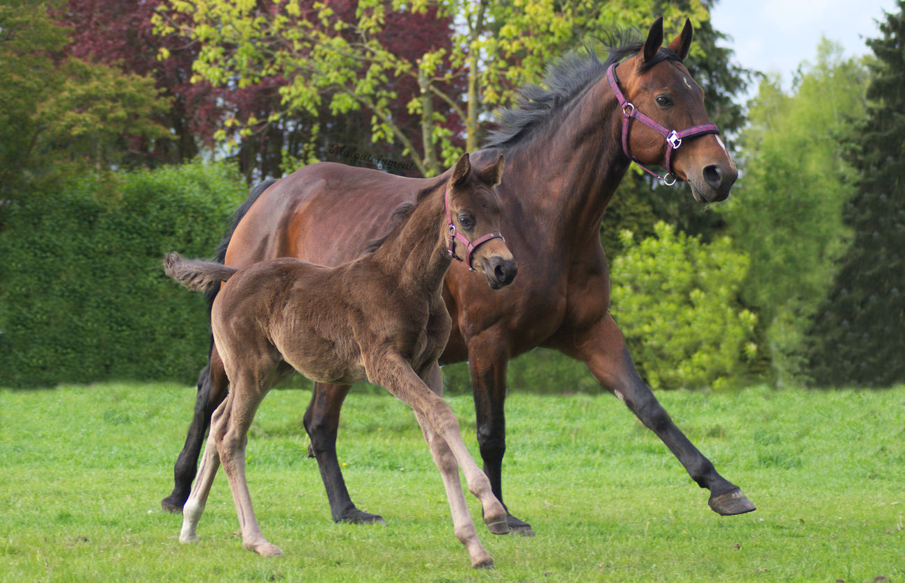 Animal Grass Tree Domestic Animals Outdoors No People Nature Animal Themes Galopp Trab Rennen Action Shot  Action Horse Hannover Celle Niedersachsen Horse Photography  Pferdefotografie Pferd Foal Fohlen Mutter Und Tochter Mother And Daughter