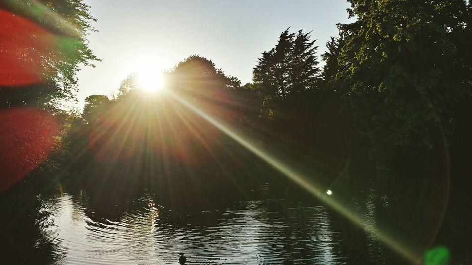 Glitch Birkenheadpark BirkenheadLake Beauty Of Nature Sunrays Beams Of Light
