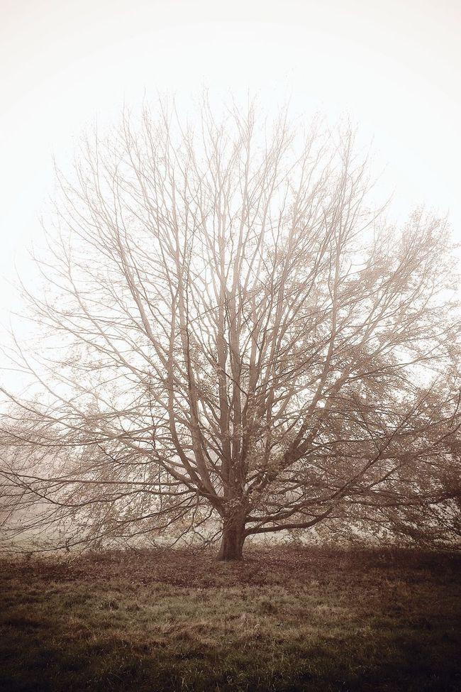 Autumn Tree TreePorn Colors Of Autumn Sad lonely tree ?