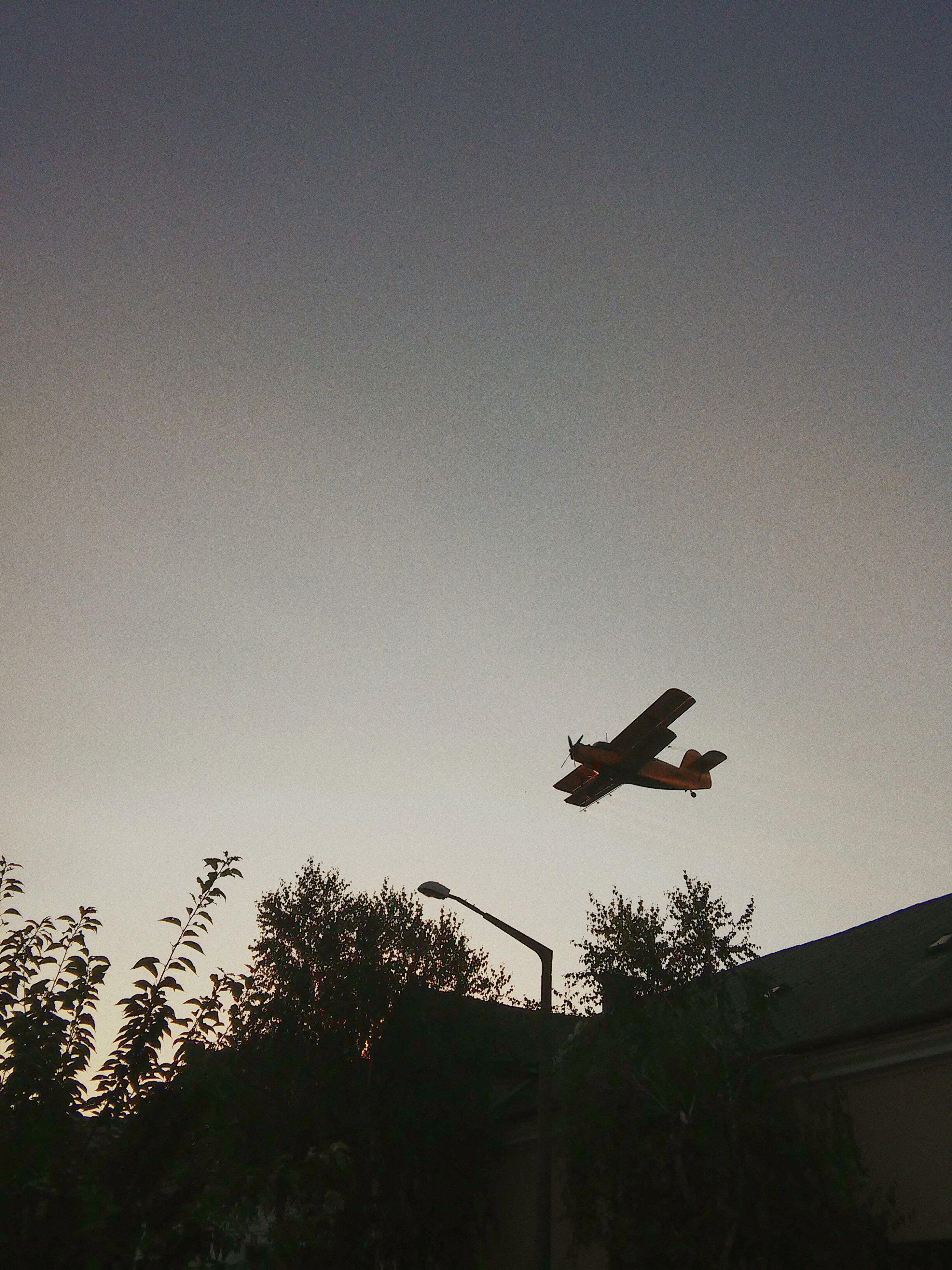 silhouette, transportation, flying, mode of transport, airplane, air vehicle, low angle view, mid-air, copy space, clear sky, sky, tree, dusk, outdoors, on the move, nature, travel, land vehicle, built structure, no people
