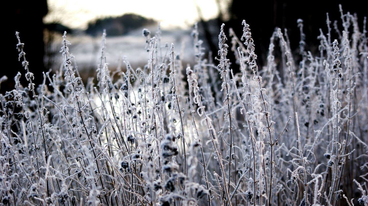 Moning frost... Nature Outdoors Focus On Foreground No People Day Grass Tranquility Winter Cold Temperature Beauty In Nature Close-up Landscape Water Moning Frost Frosty Mornings Plant Creek Denmark Aalestrup Bridge Landscapes Moning Walk Outside Cold