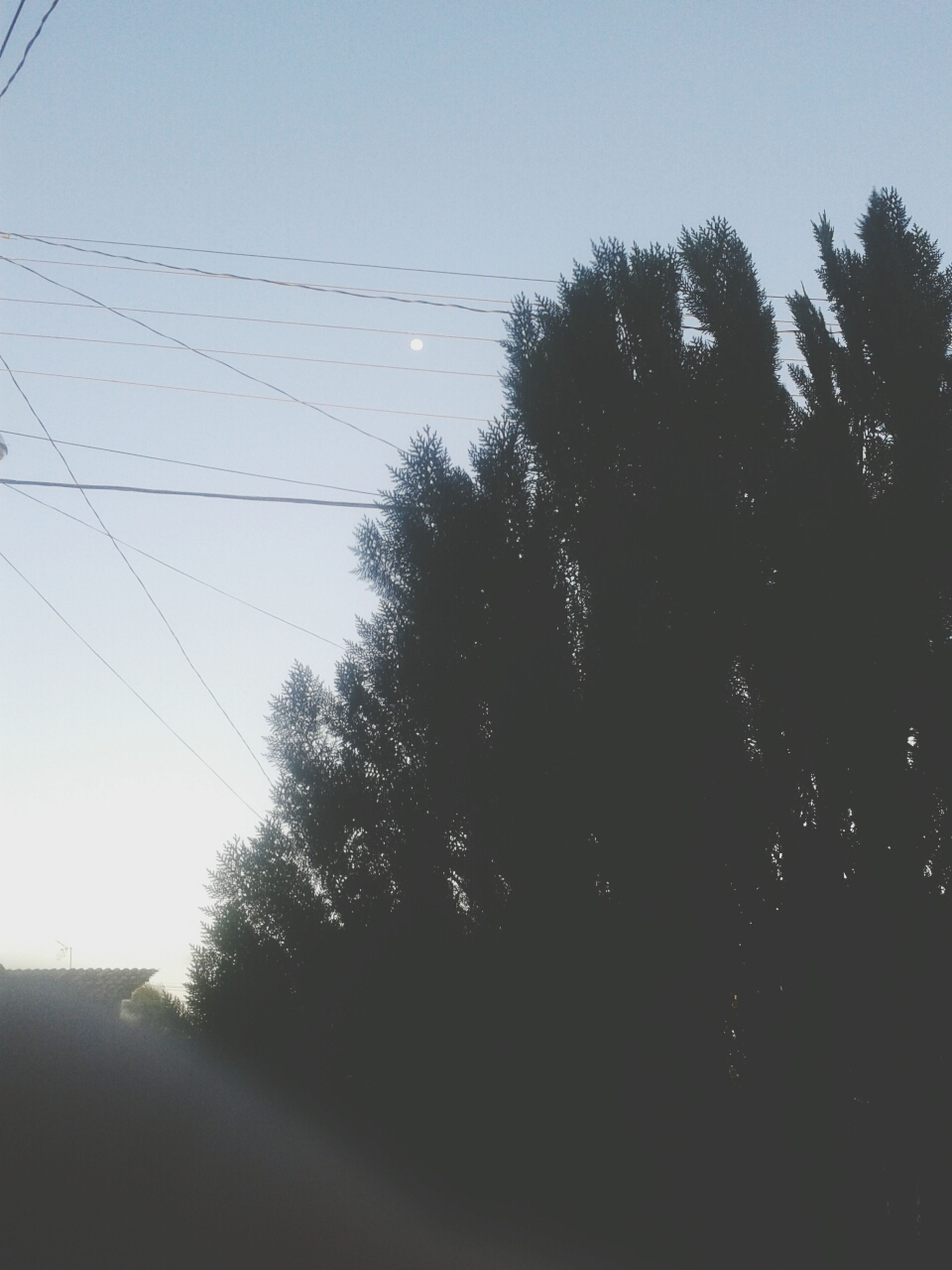 tree, silhouette, clear sky, low angle view, power line, sky, tranquility, nature, transportation, electricity pylon, connection, growth, cable, electricity, tranquil scene, outdoors, dusk, no people, beauty in nature, street light