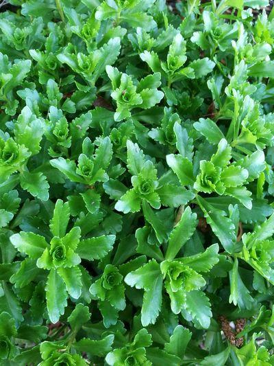Close-up Plant Freshness Leaf Full Frame Green Color