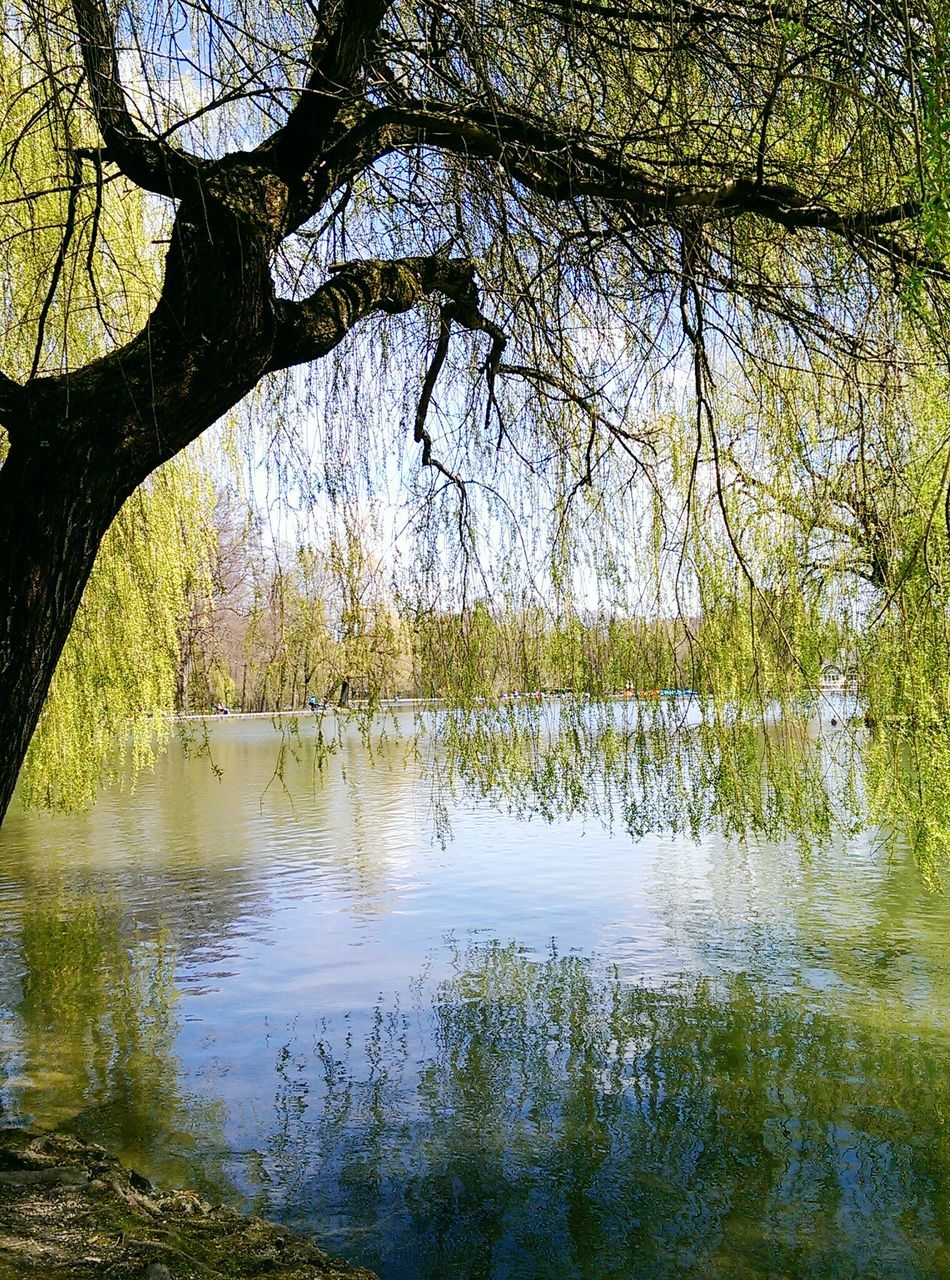 Weeping Willow On Riverbank