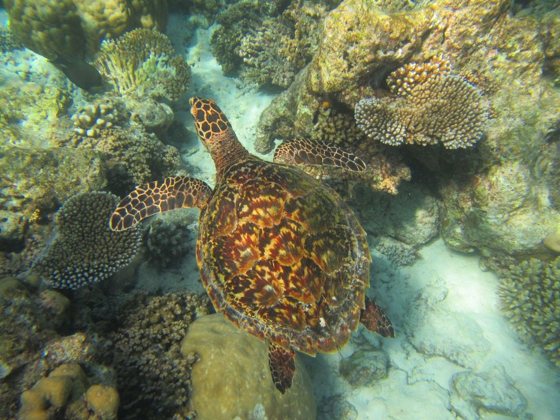 it's so lucky,we met the sea turtle when snorkelling