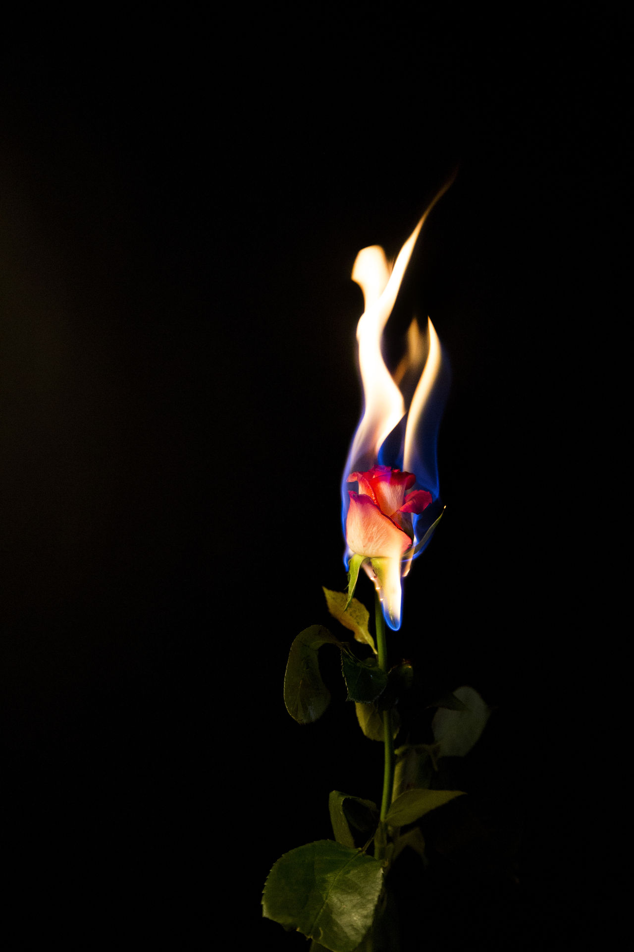 Black Background Nature Fire Flower