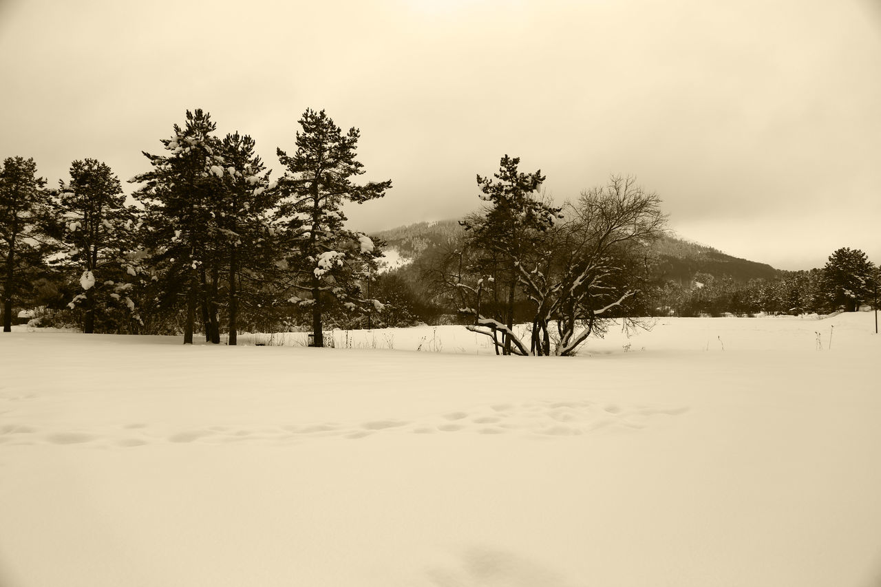 snow, winter, cold temperature, tree, nature, tranquility, tranquil scene, beauty in nature, scenics, landscape, weather, no people, outdoors, sky, day